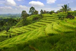 The Nature of Indonesia